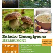 Decouverte-champignons-12-octobre.jpg